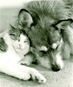 The Dog Who Loved And Rescued Cats