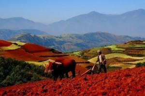 Beautiful red fields in China