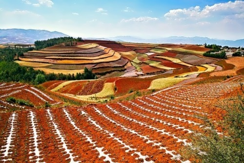 Wonderful red fields in China