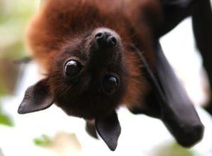 A few words about bats