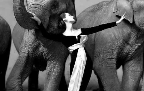 Dovima with the elephants. Richard Avedon