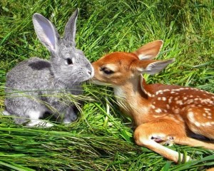 Rabbit and Deer