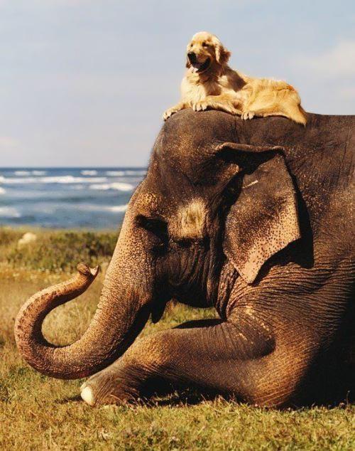 Dog and Elephant