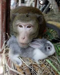 Monkey and Rabbit