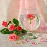 The rose – myth and meanings