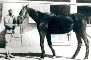 Old Billy - the oldest horse