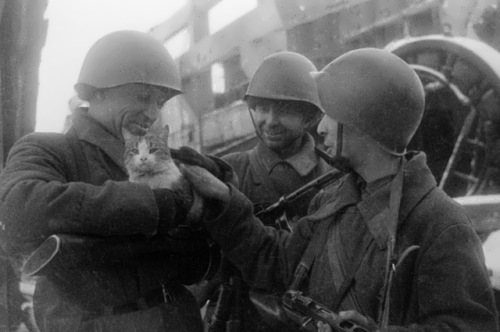 The commander of the 13th Guards Division Alexander Rodimtsev (center) with the soldiers and a cat. 1942, Stalingrad