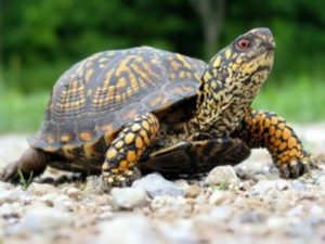 Turtles - Taking Their Time