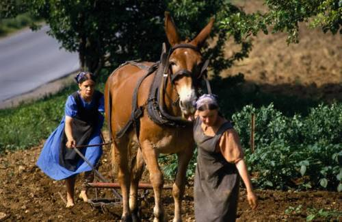 Women also work in the field