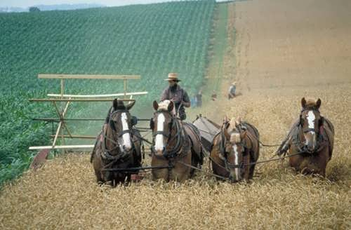 Amish people are farmers