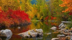 Autumn – best painter
