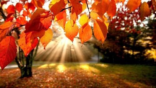 Autumn is gorgeous