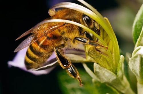 Bee inside the flower
