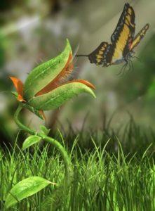 Green predators - carnivorous plants