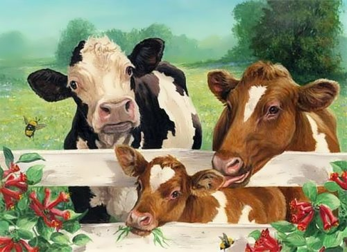 Cute cows in a sunny day