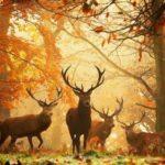 Beautiful deer