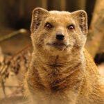 Cute furry animal