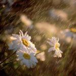 Rain – amazing natural phenomenon