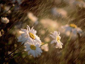 Rain - amazing natural phenomenon