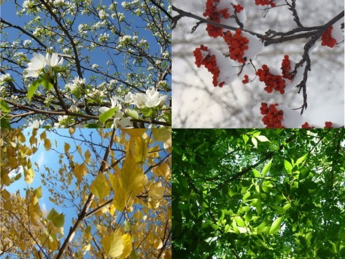 Why do we have different seasons?