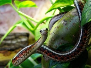 Snakes – mysterious creatures