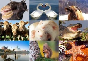 Most interesting facts about animals