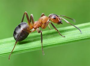 Ants are incredibly clever and can move very quickly