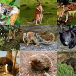 Animal World of Australia