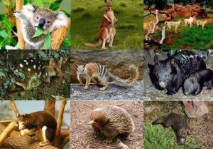 Animal World of Australia