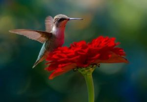 Humidbird