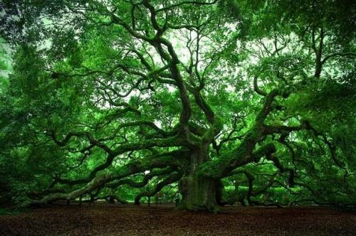 Interesting facts about trees