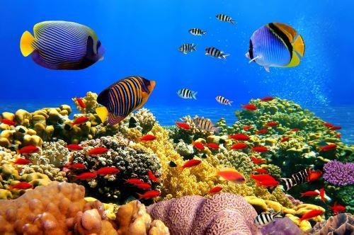 Amazing underwater creatures