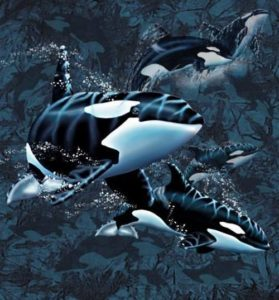 How many killer whales do you see?