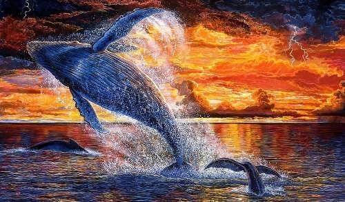 Whales – biggest animals of all