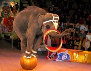 Hula Hoop as circus art