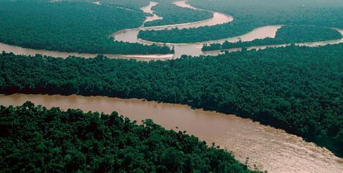 Stunning Amazon