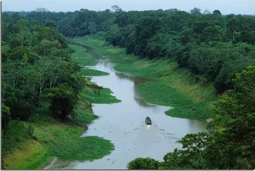 Gorgeous Amazon