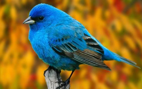 Lovely and interesting bird