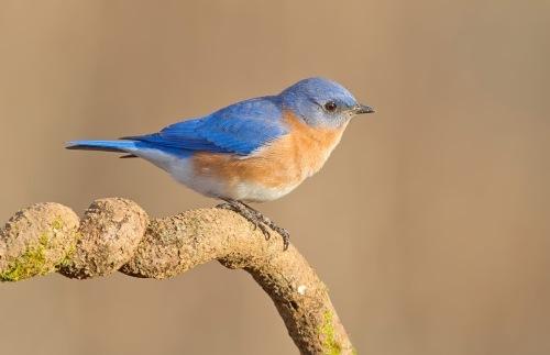 Wonderful bird