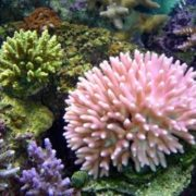 Charming Corals