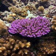 Amazing Corals