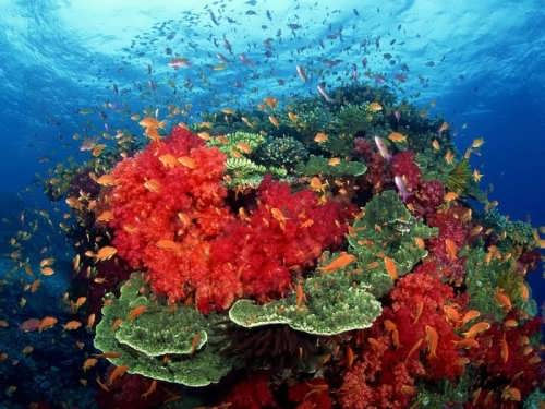 The colors of the reefs are impressive