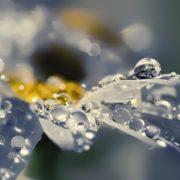 Amazing dew