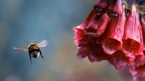 Bee and wonderful flowers