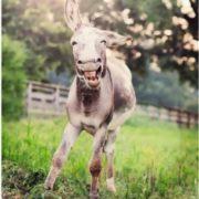 Amazing donkey