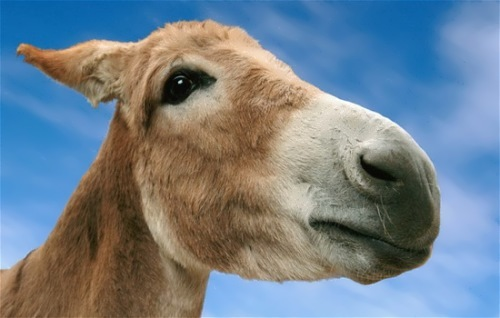Charming donkey