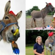 Donkey Patty and her teacher Vicky Greenslade