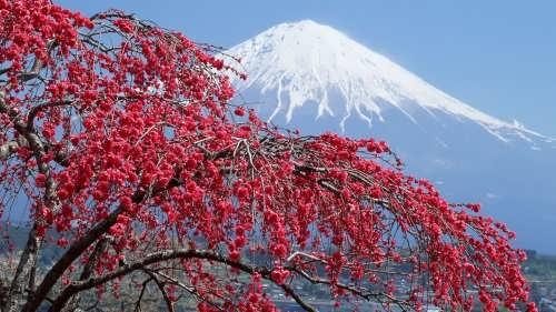 Wonderful Fujiyama