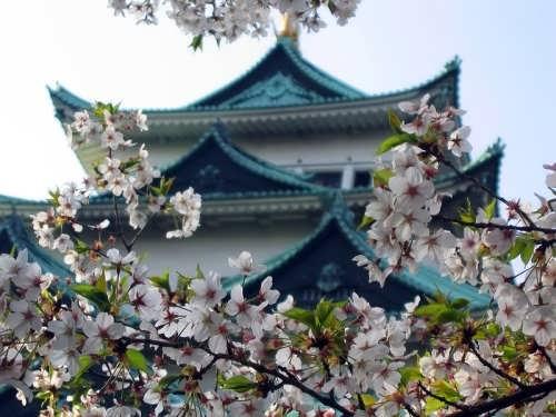 Wonderful Japan