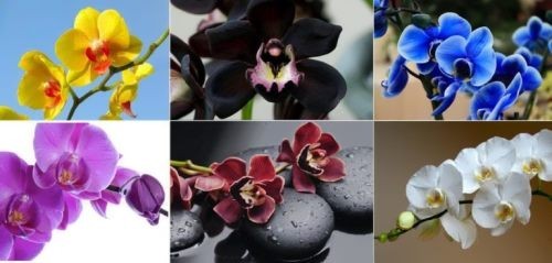 Orchid – amazing and mysterious flower
